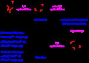 Ozonolysis - The reaction mechanism of ozonolysis.