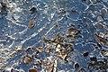 Pörtschach Winklern Bannwaldweg 8 Pfütze mit Eisgebilde 29112013 4331.jpg
