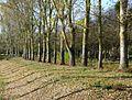 P1340258 Angers parc de Balzac rwk.jpg