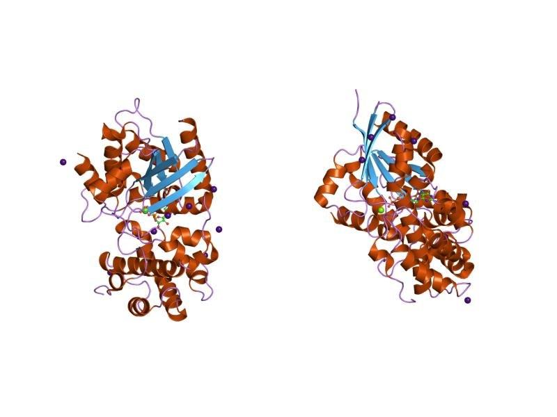 PDB 1kjy EBI