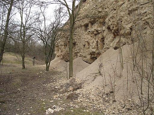 PP Miocenní sladkovodní vápence, stěna (005)