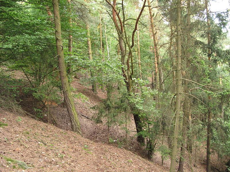 File:PP Třímanské skály, stromy na svahu.jpg
