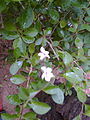 Pale pink flower.jpg