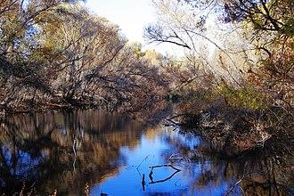 Hassayampa River - Palm Lake at the Nature Conservancy's Hassayampa River Preserve, near Wickenburg, Arizona