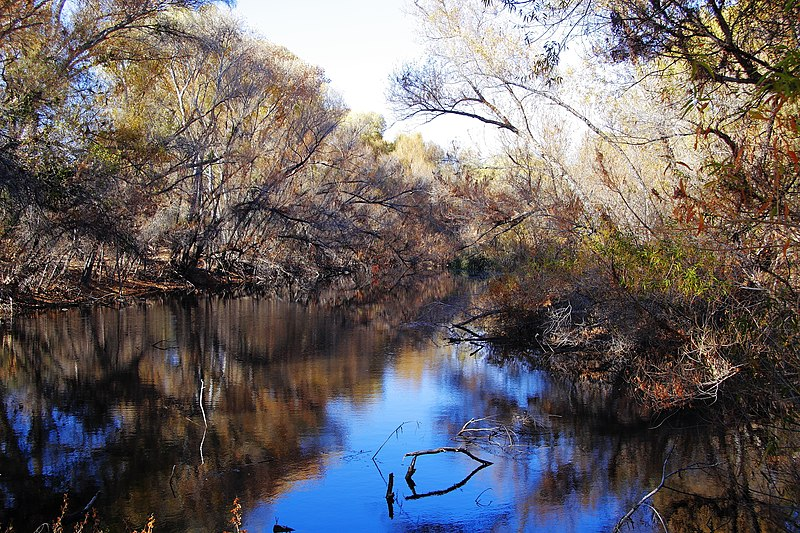 File:Palm Lake at Hassayampa River Preserve.jpg