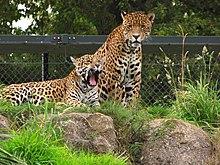 Chester Zoo - Wikipedia  Zoo
