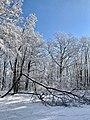 Park- złamane drzewko.jpg