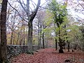 Park Wall, Leigh Woods - November 2013 - panoramio.jpg