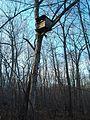 Parker Woodland treehouse 2.jpg