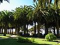 Parque Ross, Pichilemu - panoramio (4).jpg