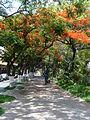 Paseo Hidalgo Tehuacán.jpg