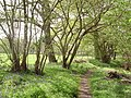 Path at the edge of Lower Copse Wood - geograph.org.uk - 779112.jpg