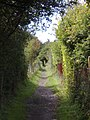 Path away from Hassocks - geograph.org.uk - 605279.jpg
