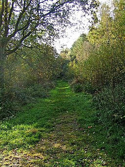 Path to the edge of Uffmoor Wood - geograph.org.uk - 1546679