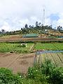 Pattipola-Sri Lanka (3).jpg