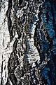 PermaLiv bjørkebark 07-05-21.jpg
