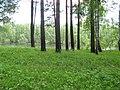 Pervomaysky District, Tomsk Oblast, Russia - panoramio (23).jpg