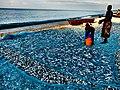 Pesce ad essiccare sulla riva del lago malawi.JPG
