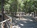 Peterson Lake Nature Center Collierville TN 13.jpg