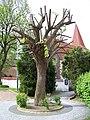 Petrovice, kostel a ořezaný strom.jpg
