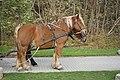 Pferde einer Pferdekutsche Hiddensee 20181031 004.jpg