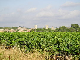 Distant view of the town center of Pignan and vineyards