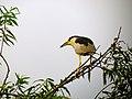 Pinckney Island National Wildlife Refuge (5957936927).jpg
