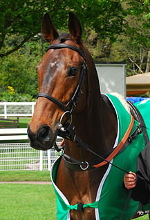 Pineau de Re French-bred racehorse