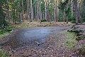 Pinky v lese severně od města, Kunštát, okres Blansko.jpg
