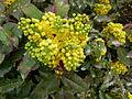 Plante du Jardin du Luxembourg 5.JPG
