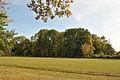 Plotycha-park-14101738.jpg