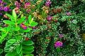 Poison Glen - Mother Nature - the florist - geograph.org.uk - 1189623.jpg