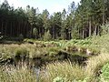 Pool in Delamere Forest - geograph.org.uk - 62461.jpg