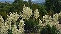 Pražská botanická zahrada, Prager botanischer Garten - panoramio (2).jpg