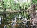 Psilskyi Landscape Reserve (05.05.19) 17.jpg