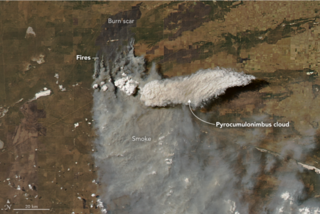 Cumulonimbus flammagenitus (cloud) Cumulonimbus cloud that forms above a wildfire