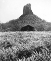 Queensland State Archives 2120 Mt Coonowrin Crookneck Glass House Mountains c 1934.png