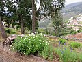 Quinta do Monte, Funchal, Madeira - IMG 6419.jpg