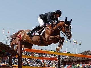 Belgian Sport Horse Belgian breed of warmblood sport horse