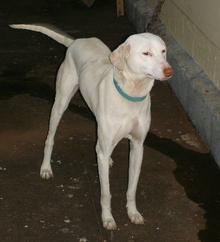 European Hound Dog Breeds