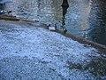 Real Parque del Buen Retiro (2806544555).jpg