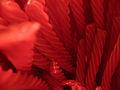 Red Vines (1808642975).jpg