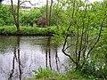 Reflecting trees, Omagh - geograph.org.uk - 1309166.jpg