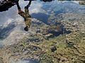 Refleksi Manusia Di Pantai Menganti, Kebumen.jpg