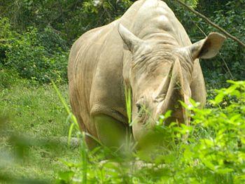 Relaxed Rhino.jpg