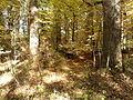 Rezerwat przyrody Dęby w Meszczach 12.51.jpg