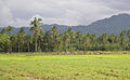 Rice-Production-in-Bunga.jpg