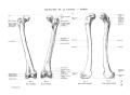 Richer - Anatomie artistique, 2 p. 33.png