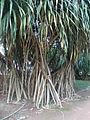 Rio de Janeiro Botanical Garden 9.JPG