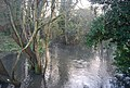 River Len in spate, Mote Park - geograph.org.uk - 1610505.jpg